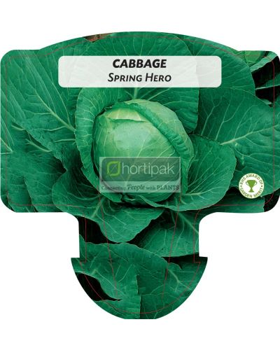 Cabbage Spring Hero (Ballhead)