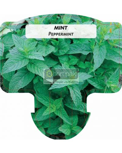 Mint, Peppermint