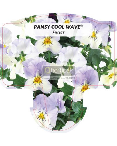 Pansy Cool Wave Frost