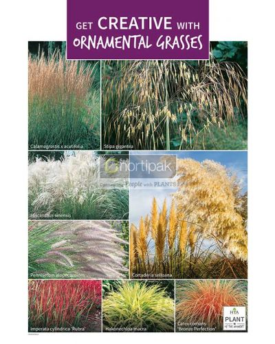 HTA Plant of the Moment August Get Creative with Ornamental Grasses Poster