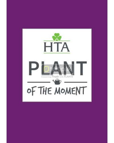 HTA Plant of the Moment Generic Poster