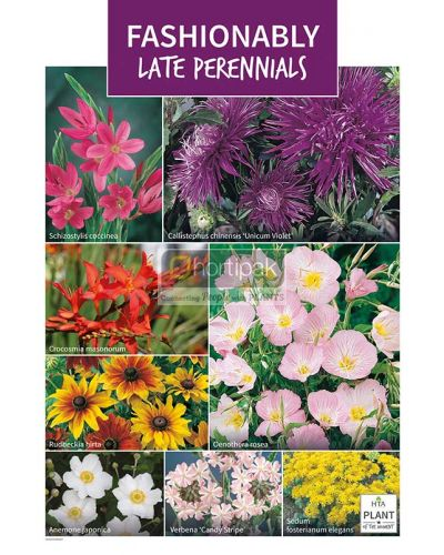 HTA Plant of the Moment September Fashionably Late Perennials Poster