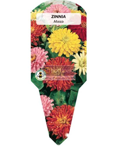Zinnia Mixed