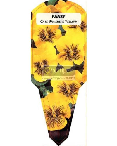 Pansy Cats Whiskers Yellow