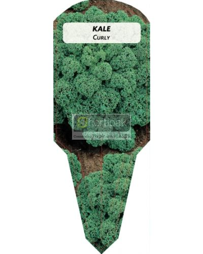 Kale Curly