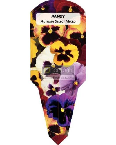 Pansy Autumn Select Mixed
