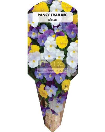 Pansy Trailing Mixed