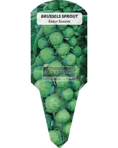 Brussels Sprout Early Season