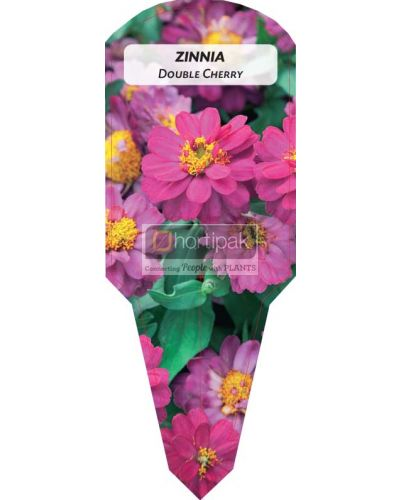Zinnia Double Cherry