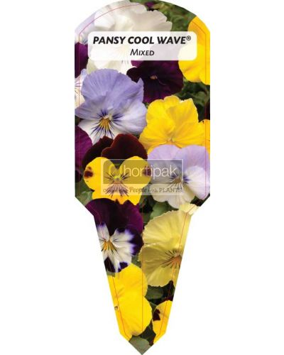 Pansy Cool Wave ® Mixed