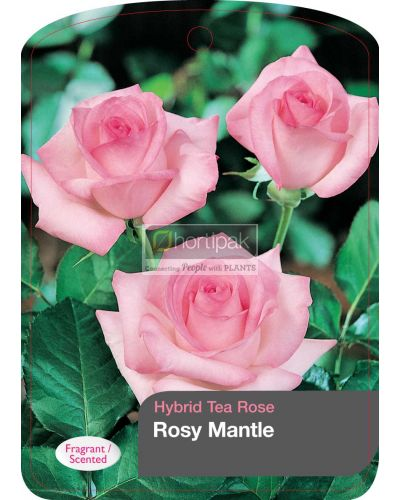Rosy Mantle