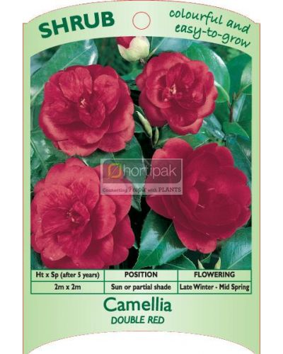 Camellia Red Double